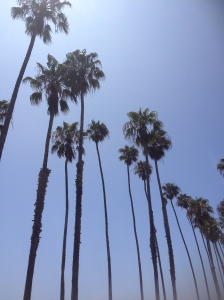 We stopped for a wee (oh, and some food) at Santa Barbara. Nice palms!