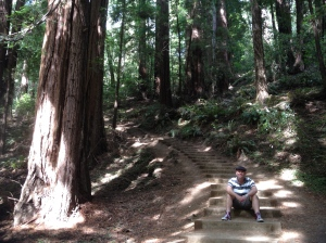 Dominic and redwoods
