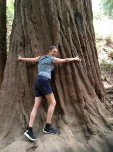 Karen hugging a very large redwood.